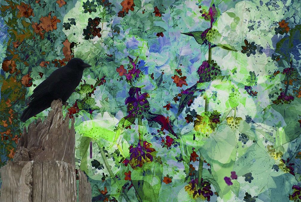 A Crow's Picnic